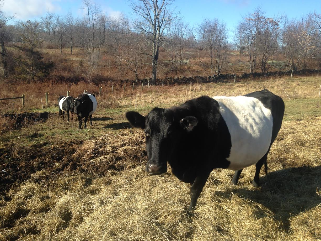 The Friends of Hilltop Hanover Farm, Inc. 501 (c) (3): Plant a Seed